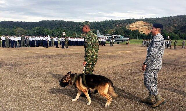 Despedida a Bruno y Tony por parte de la Fuerza Aérea Colombiana