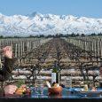 Los Andes, Viñedos y Gastronomía en Mendoza, Argentina.